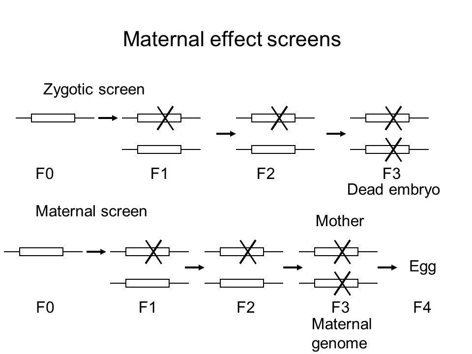 Maternal effect screens