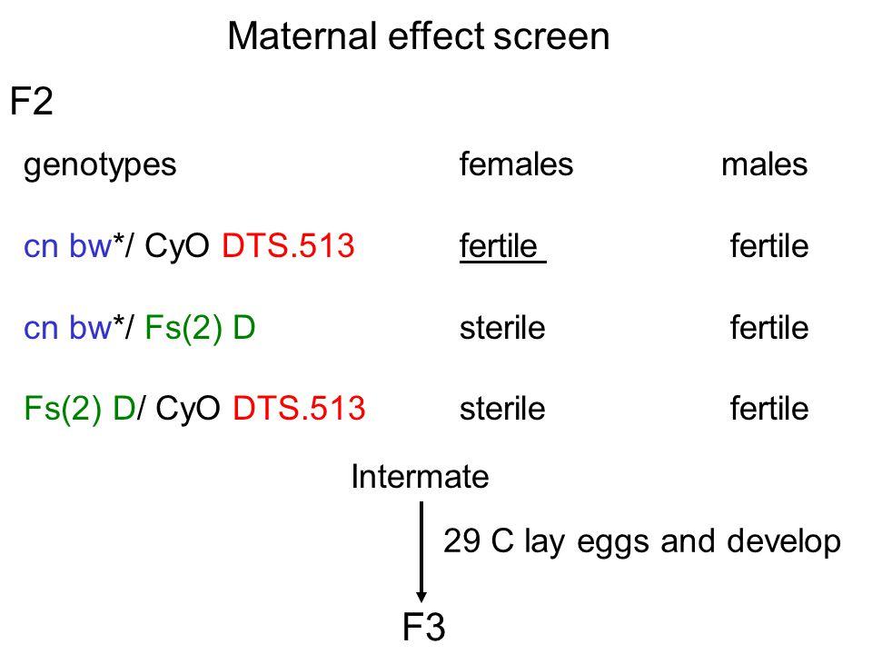 Maternal effect screen