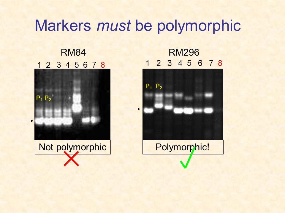 Markers must be polymorphic