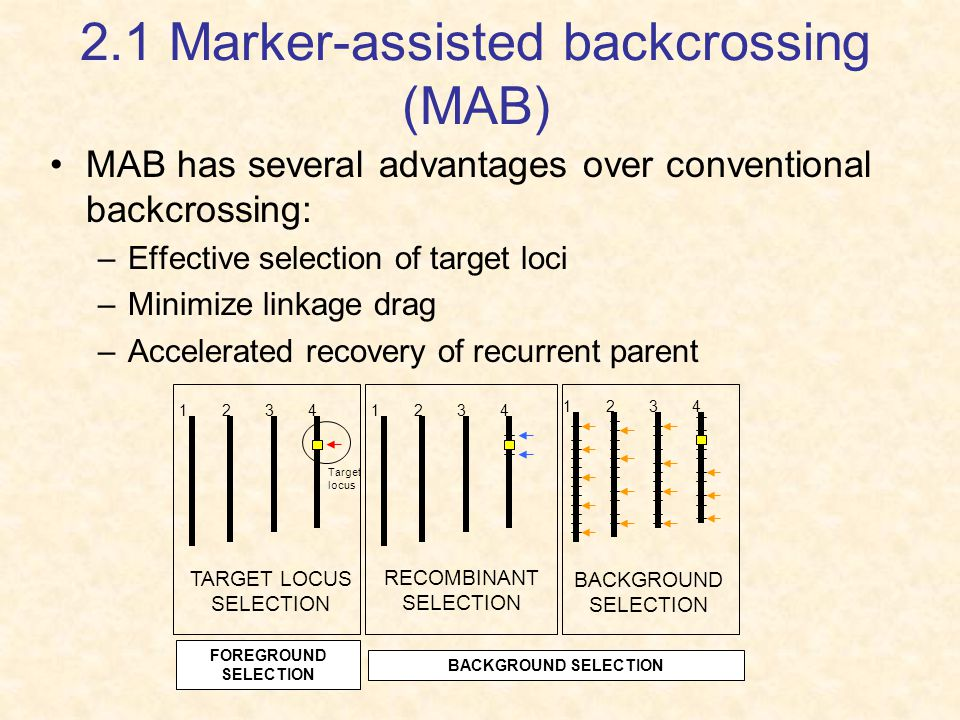 2.1 Marker-assisted backcrossing (MAB)