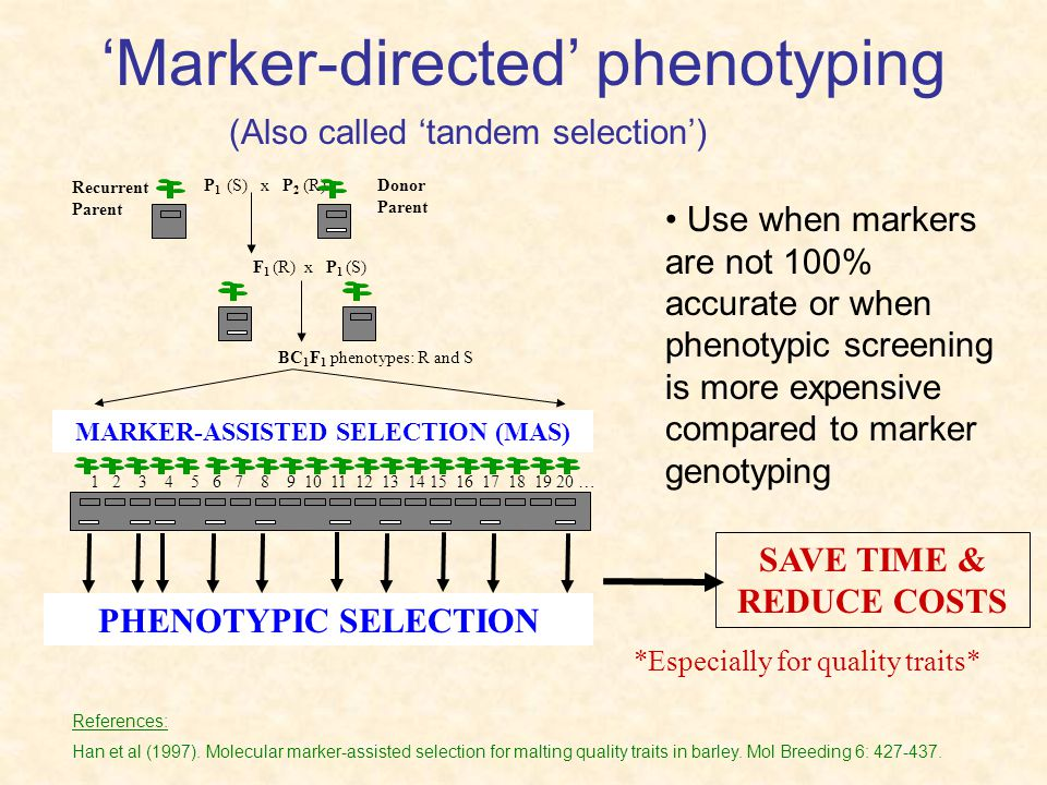 'Marker-directed' phenotyping
