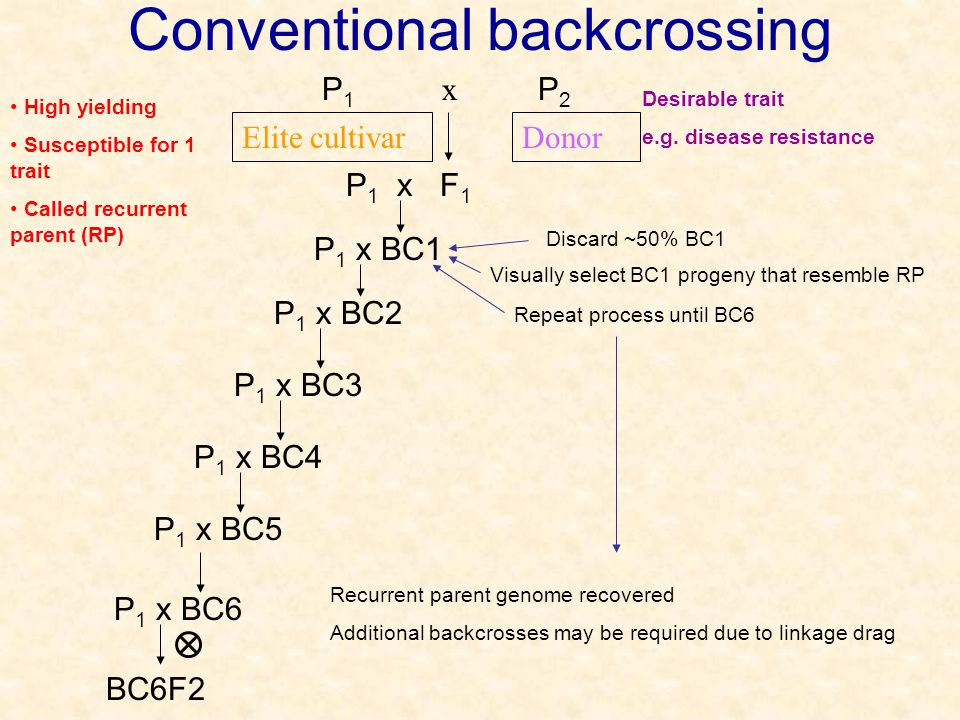 Conventional backcrossing