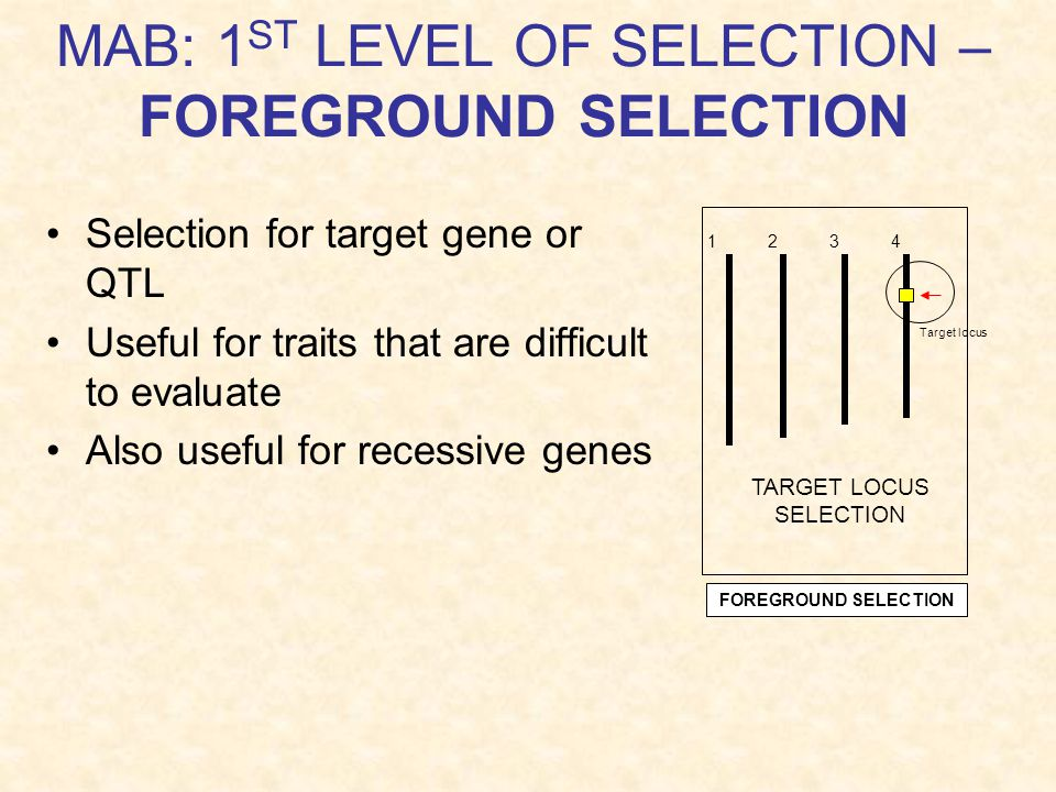 MAB: 1ST LEVEL OF SELECTION – FOREGROUND SELECTION