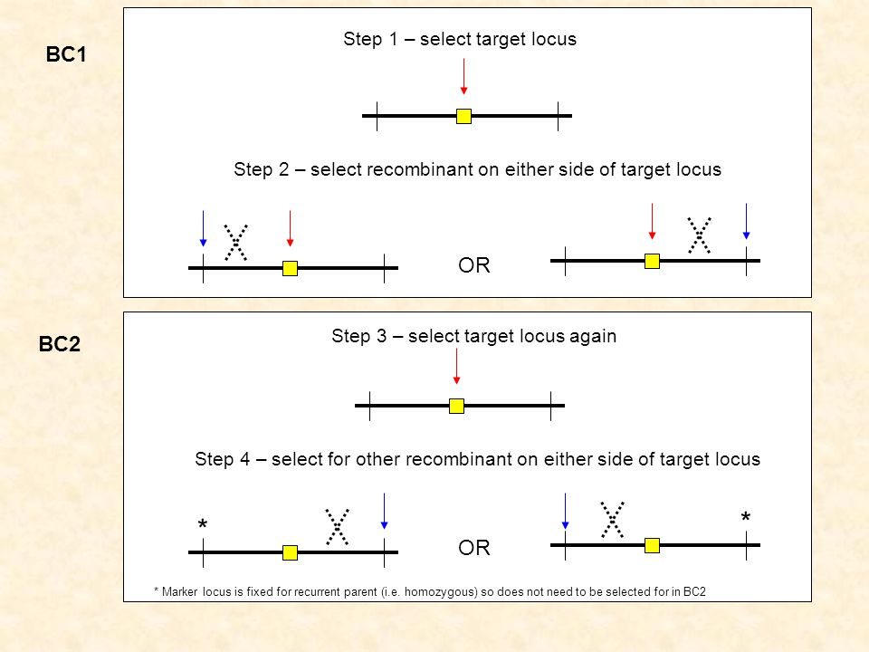 * BC1 OR BC2 OR Step 1 – select target locus