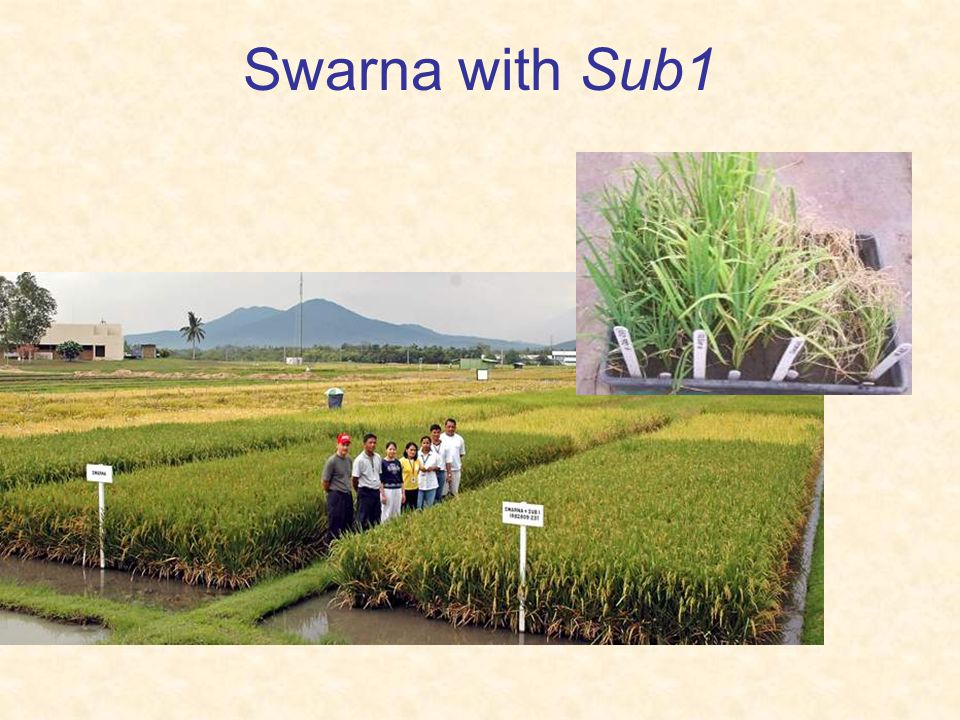Swarna with Sub1