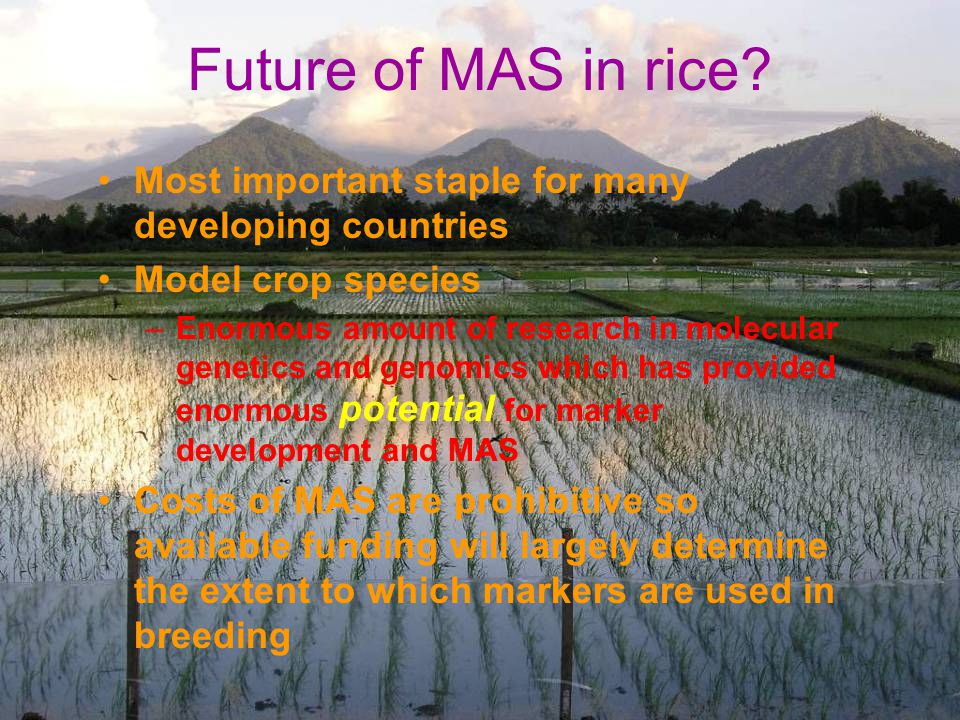 Future of MAS in rice Most important staple for many developing countries. Model crop species.