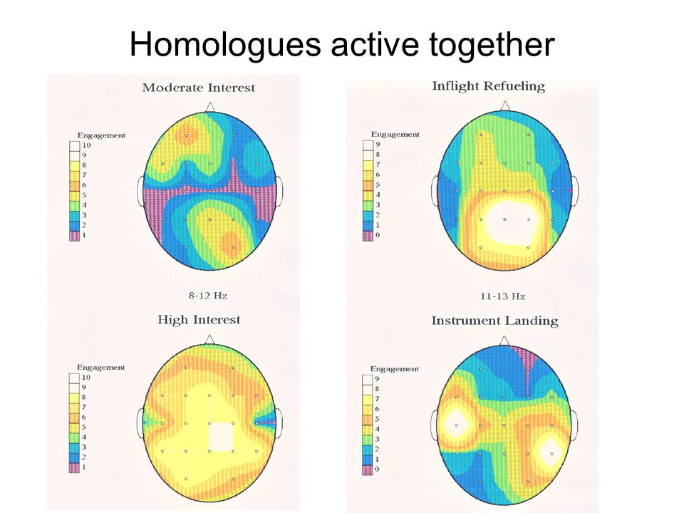 Homologues active together