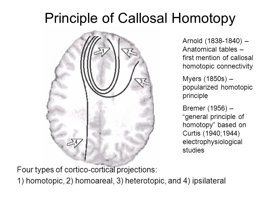 Principle of Callosal Homotopy