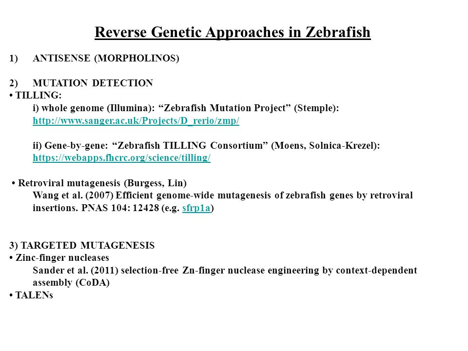 Reverse Genetic Approaches in Zebrafish
