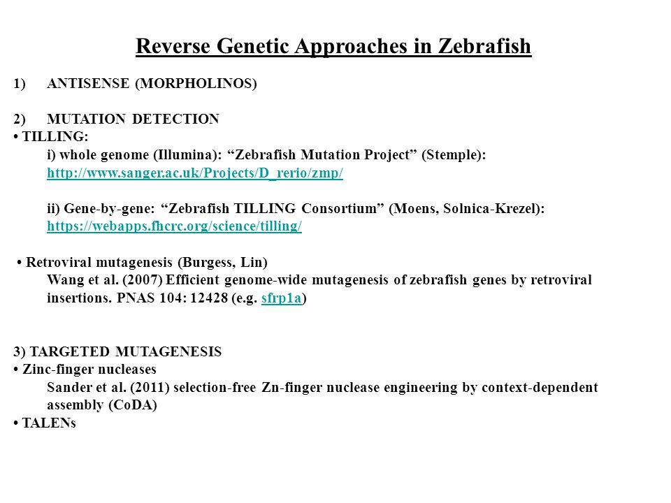 Reverse Genetic Approaches in Zebrafish