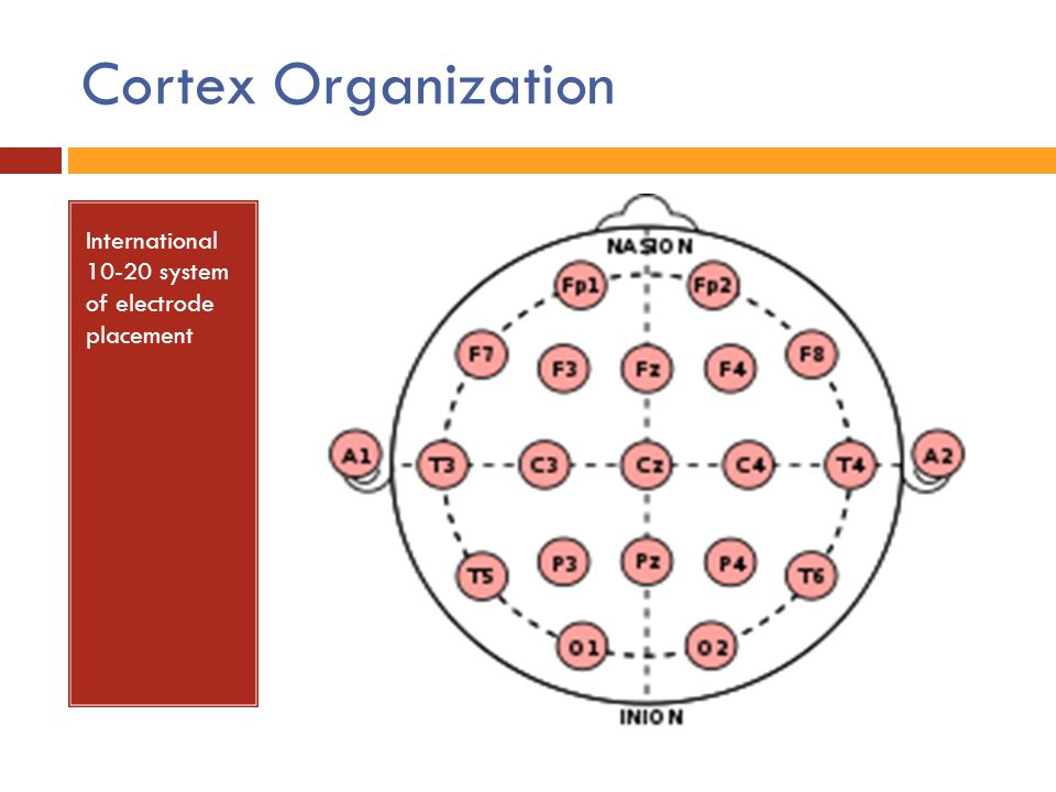 Cortex Organization International 10-20 system of electrode placement