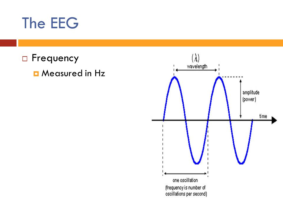 The EEG Frequency Measured in Hz
