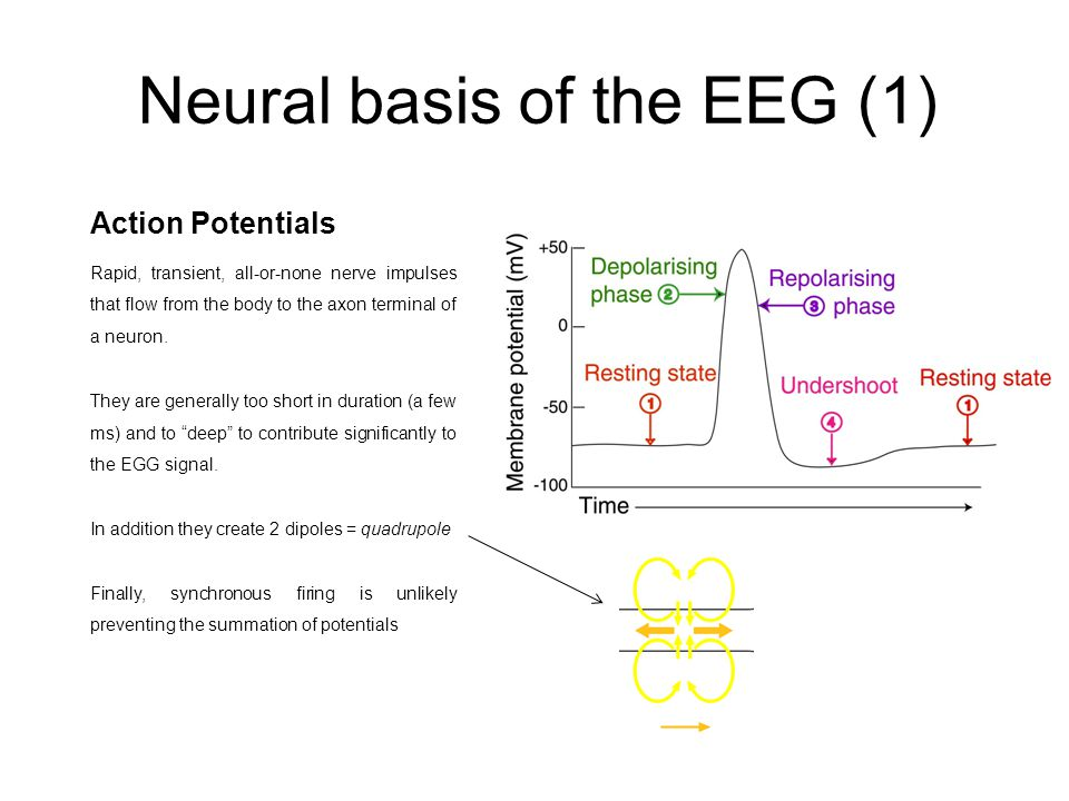 Neural basis of the EEG (1)