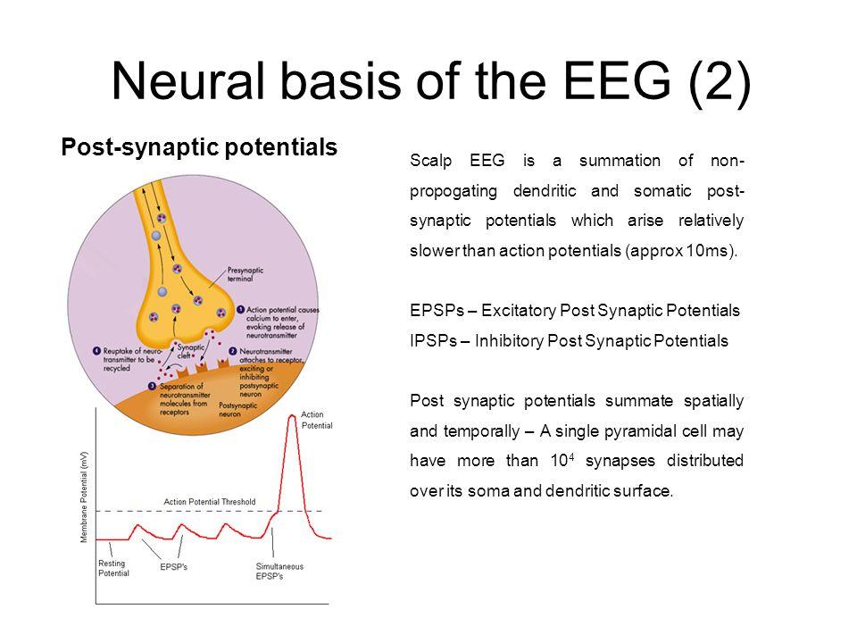 Neural basis of the EEG (2)