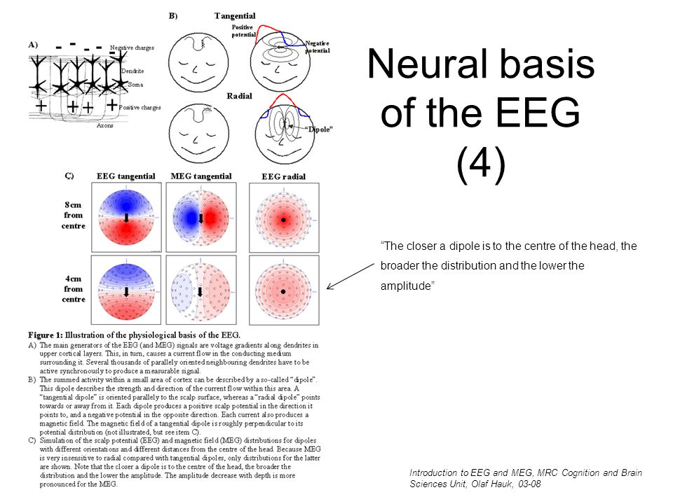 Neural basis of the EEG (4)