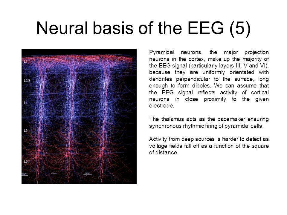 Neural basis of the EEG (5)