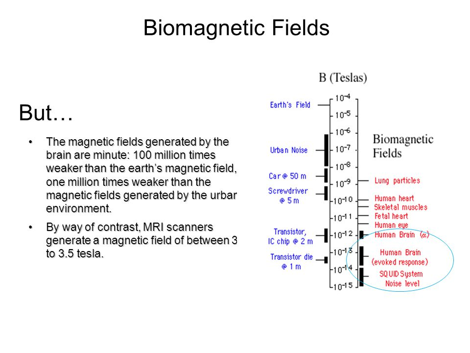 Biomagnetic Fields But…