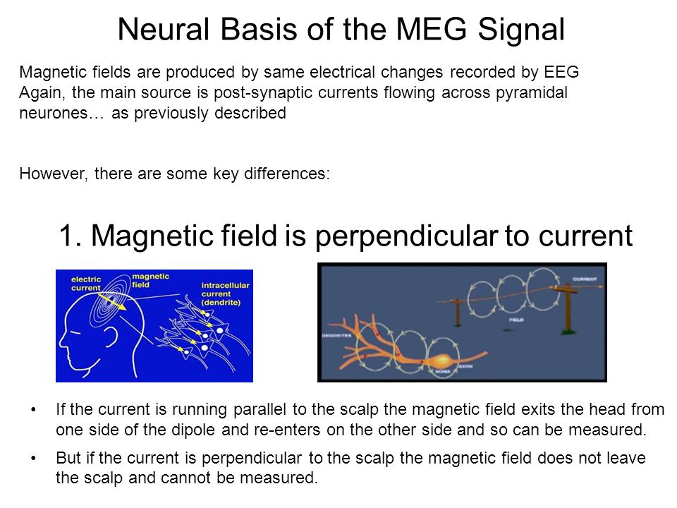 Neural Basis of the MEG Signal