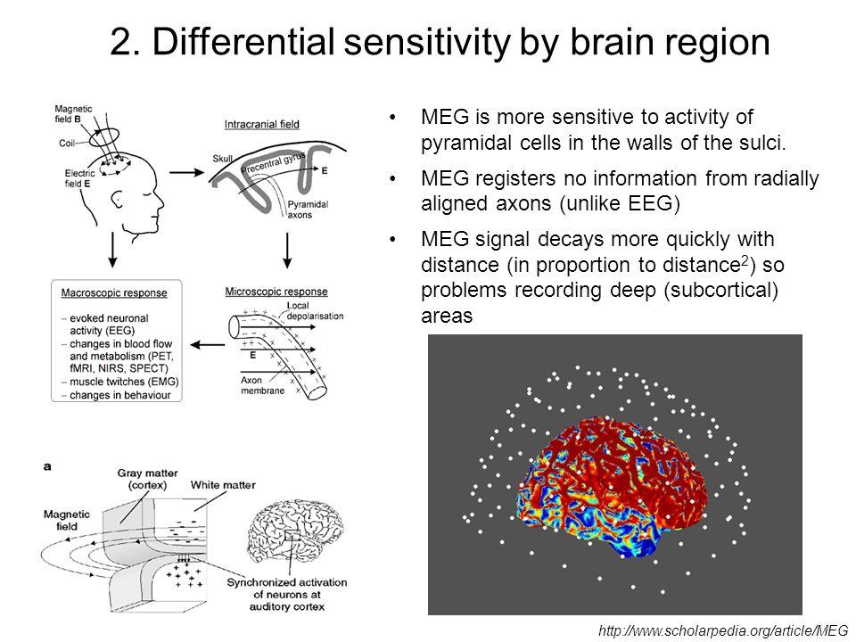 2. Differential sensitivity by brain region