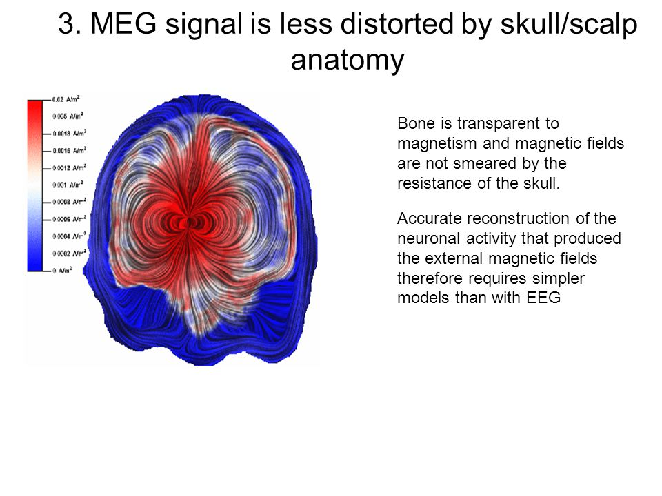 3. MEG signal is less distorted by skull/scalp anatomy