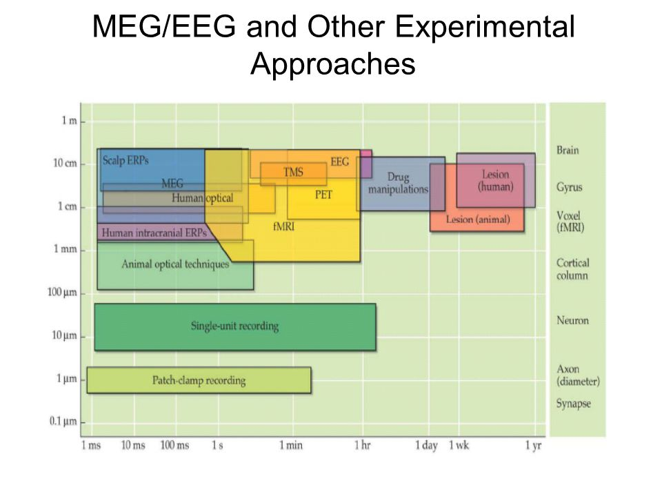 MEG/EEG and Other Experimental Approaches