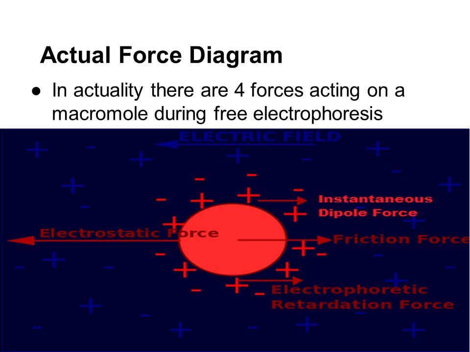 Actual Force Diagram In actuality there are 4 forces acting on a macromole during free electrophoresis.