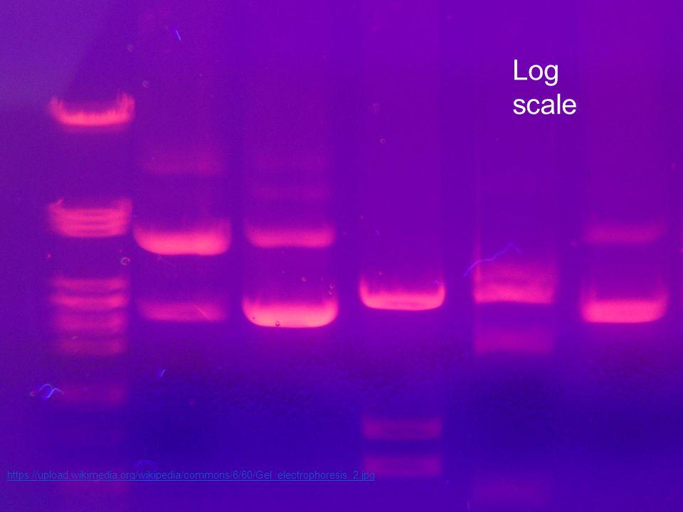 Log scale https://upload.wikimedia.org/wikipedia/commons/6/60/Gel_electrophoresis_2.jpg