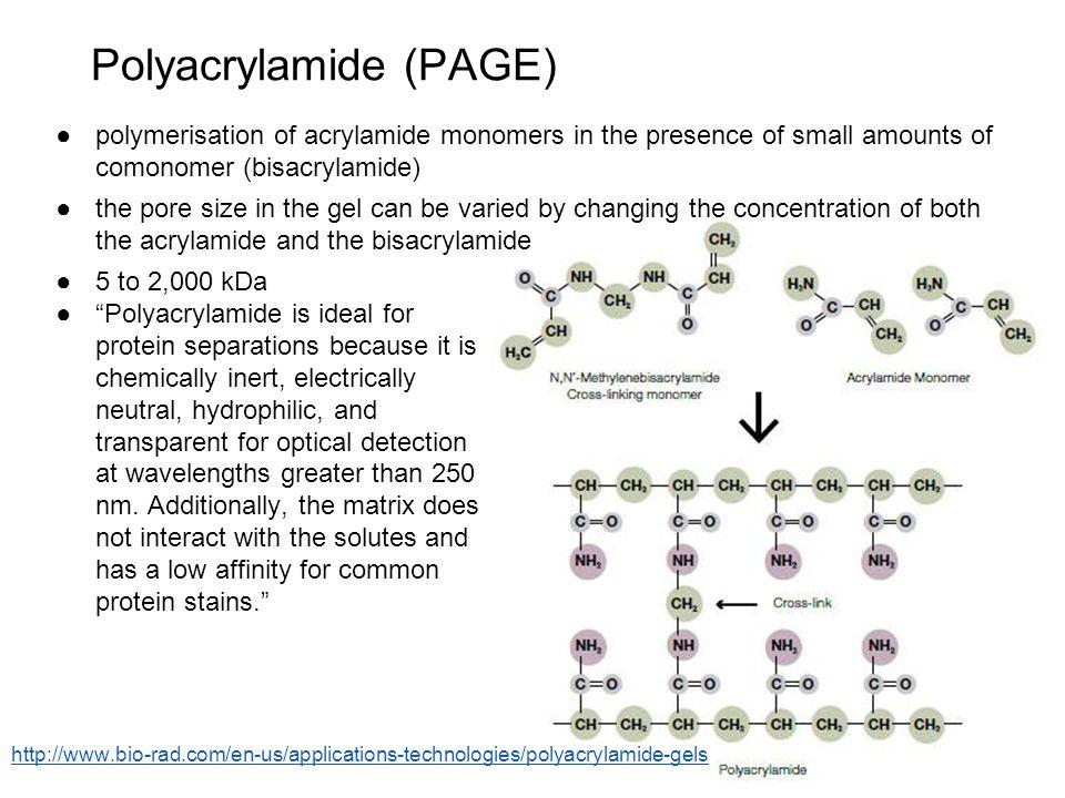 Polyacrylamide (PAGE)