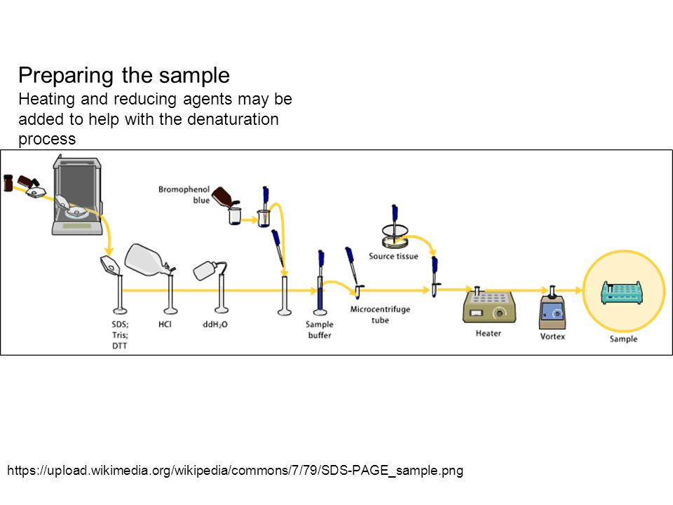 Preparing the sample Heating and reducing agents may be added to help with the denaturation process.