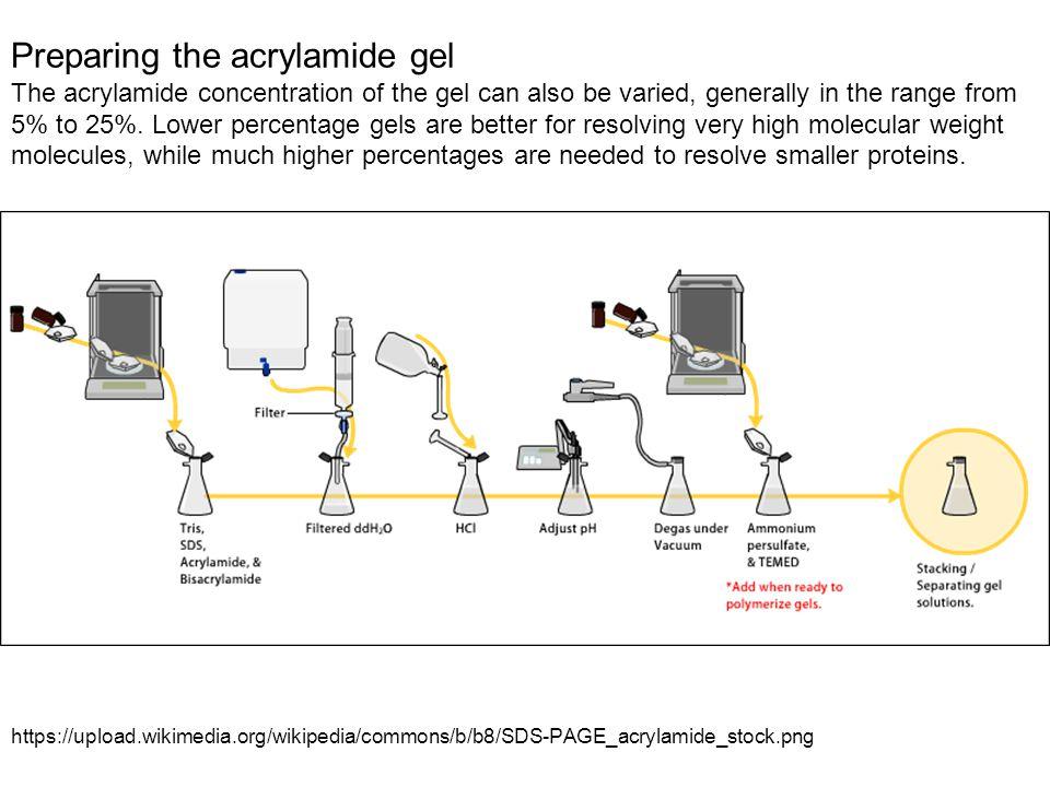 Preparing the acrylamide gel