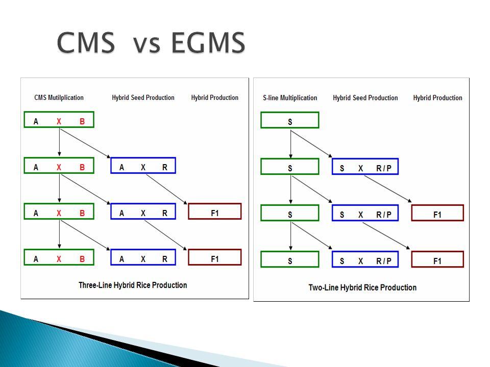 CMS vs EGMS