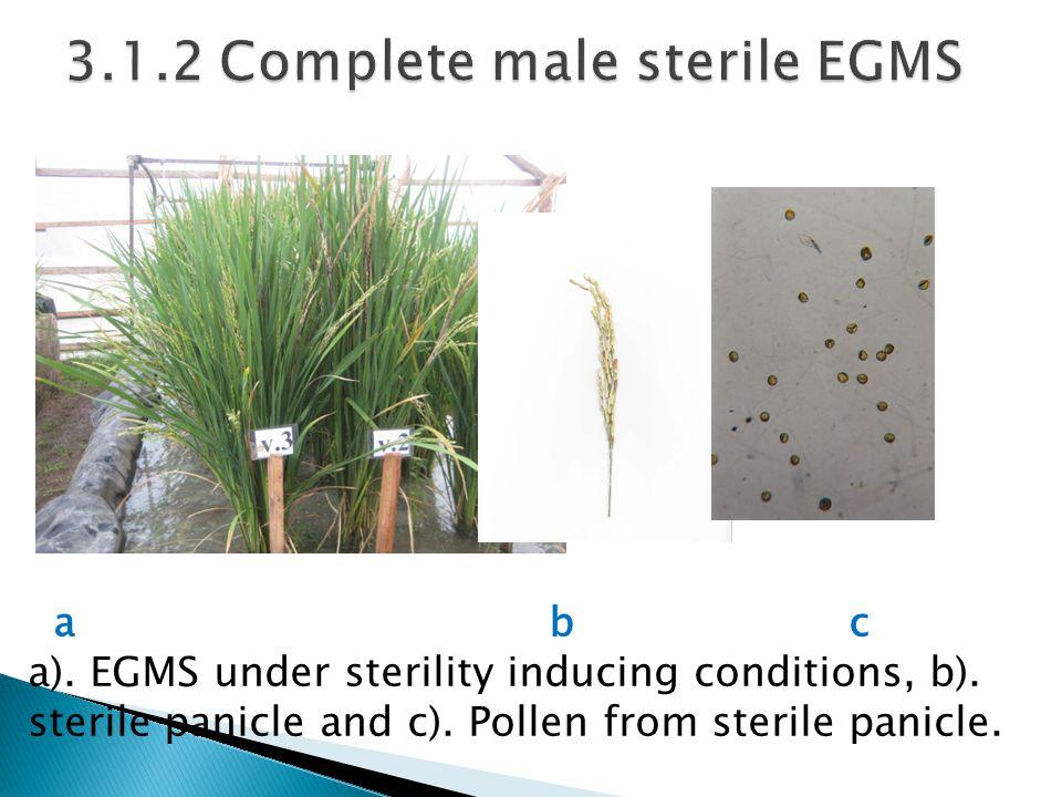 3.1.2 Complete male sterile EGMS