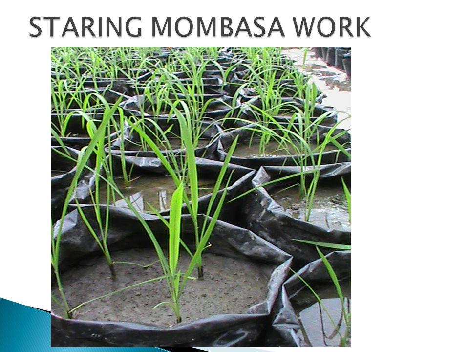 STARING MOMBASA WORK