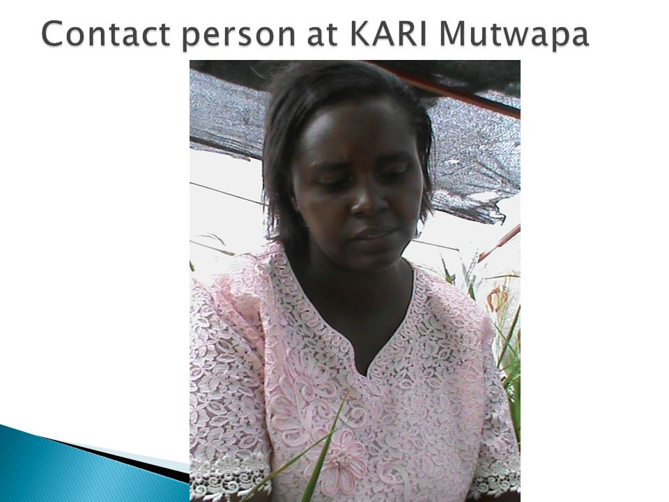 Contact person at KARI Mutwapa