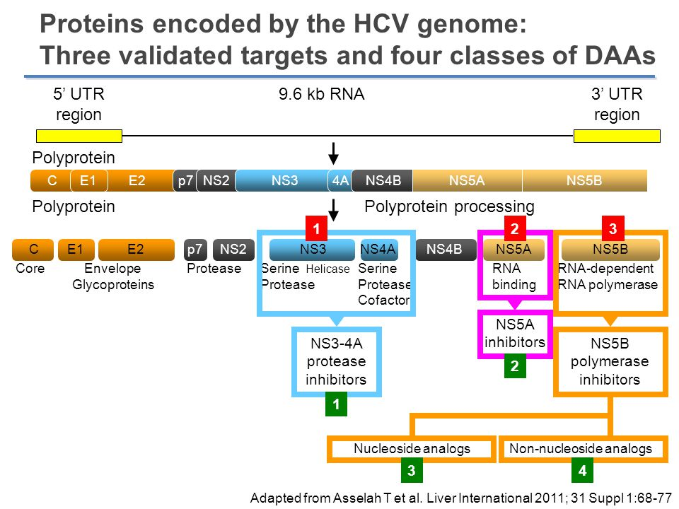 Proteins encoded by the HCV genome: Three validated targets and four classes of DAAs