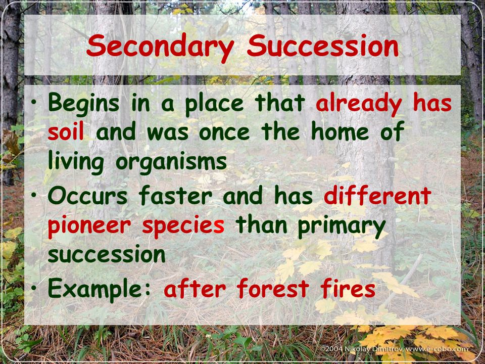 Secondary Succession Begins in a place that already has soil and was once the home of living organisms.