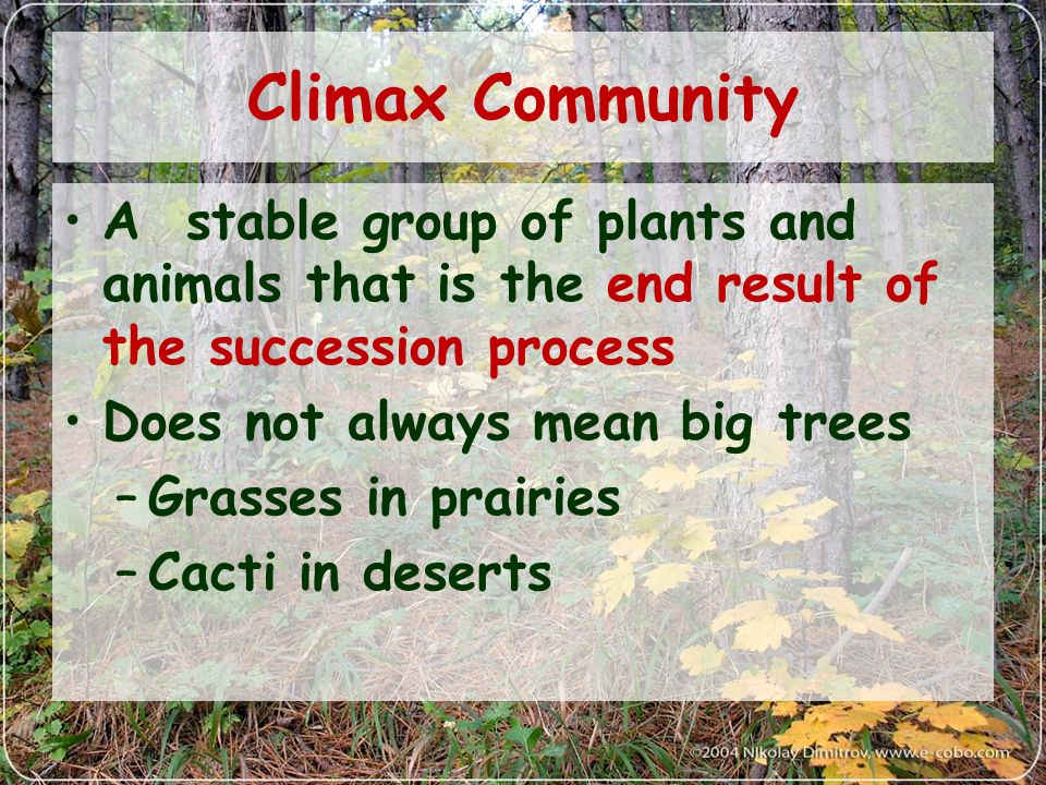 Climax Community A stable group of plants and animals that is the end result of the succession process.