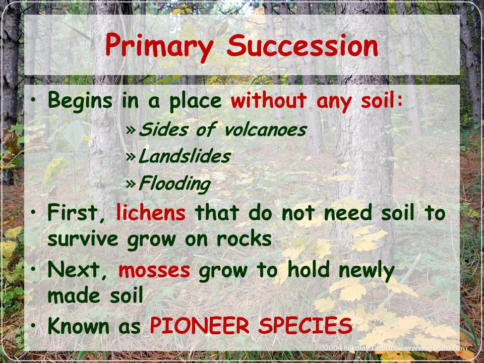Primary Succession Begins in a place without any soil: