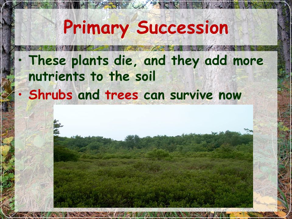Primary Succession These plants die, and they add more nutrients to the soil.