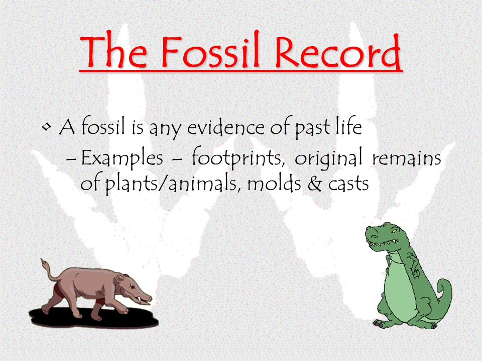 The Fossil Record A fossil is any evidence of past life