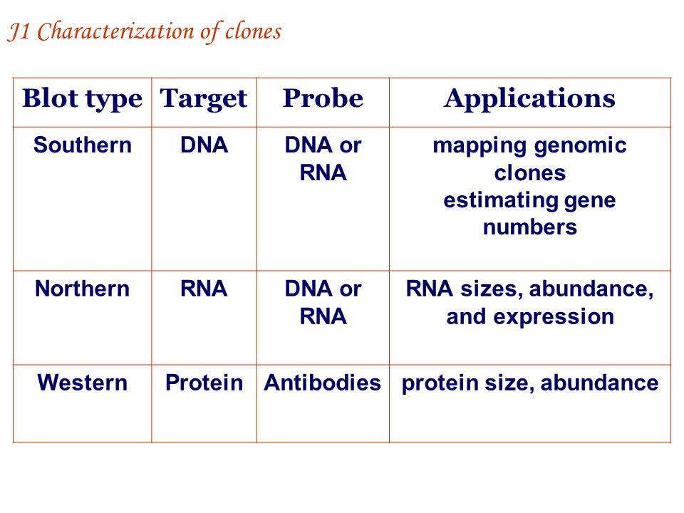 Blot type Target Probe Applications