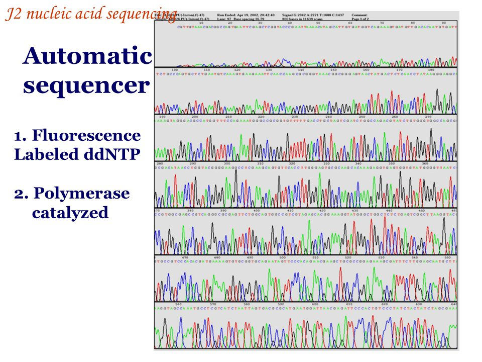 Automatic sequencer J2 nucleic acid sequencing Fluorescence