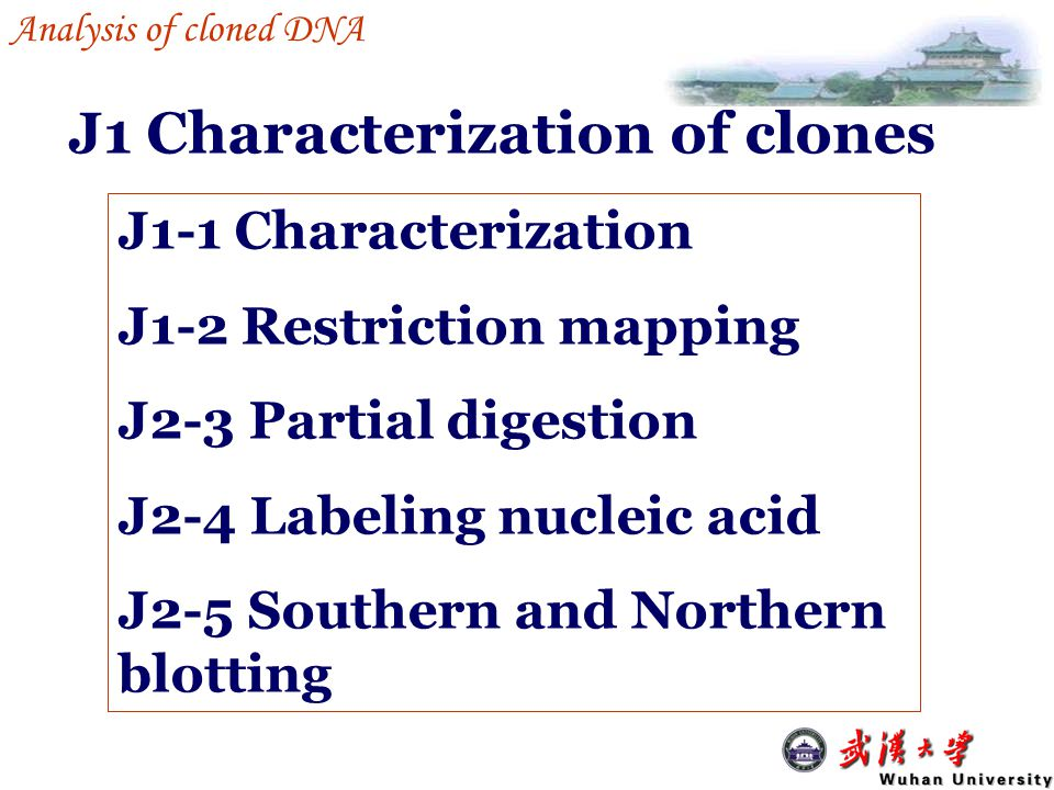 an overview analysis of cloning