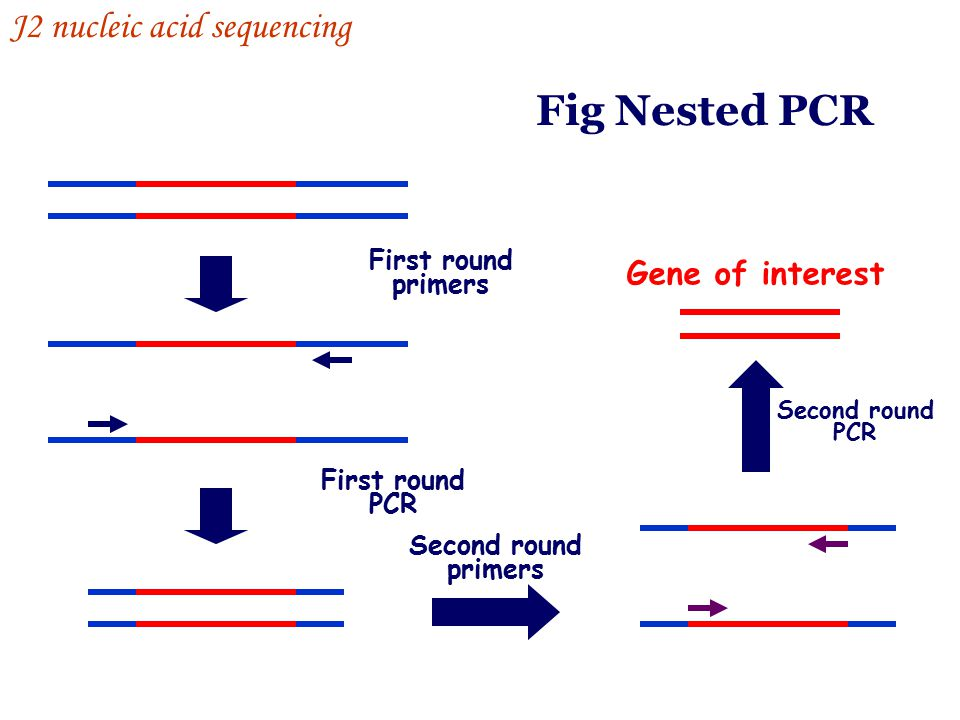 Fig Nested PCR J2 nucleic acid sequencing Gene of interest First round