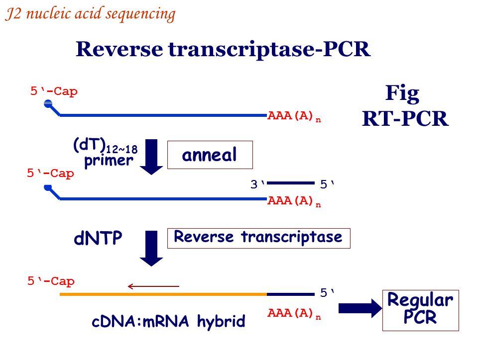 Reverse transcriptase-PCR Reverse transcriptase