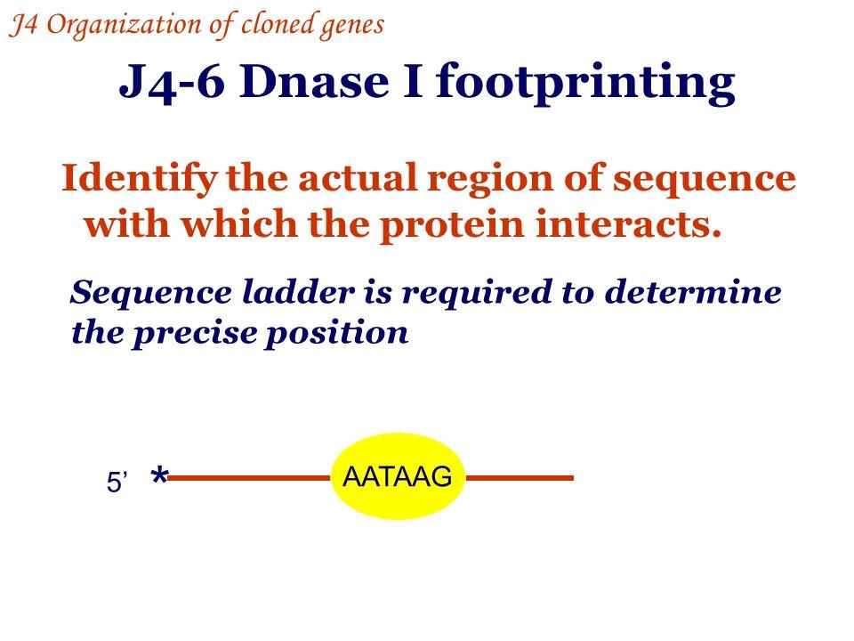 J4-6 Dnase I footprinting