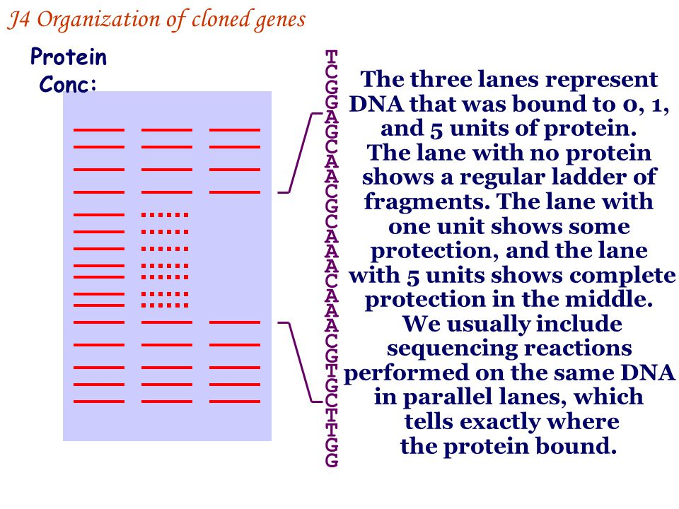 J4 Organization of cloned genes