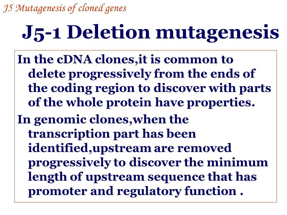 J5-1 Deletion mutagenesis
