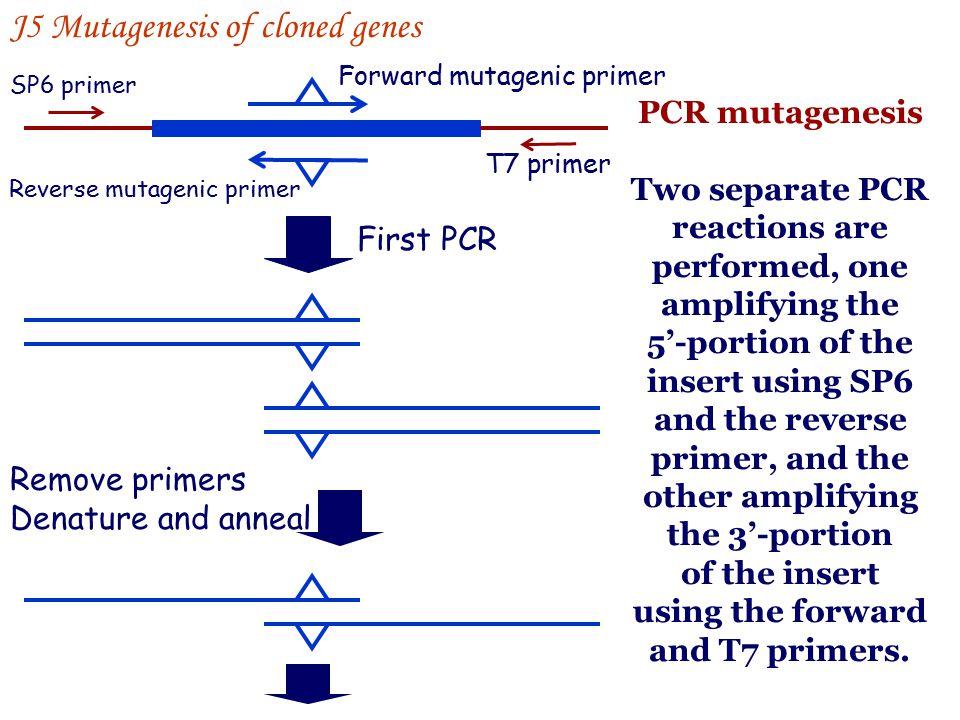 J5 Mutagenesis of cloned genes