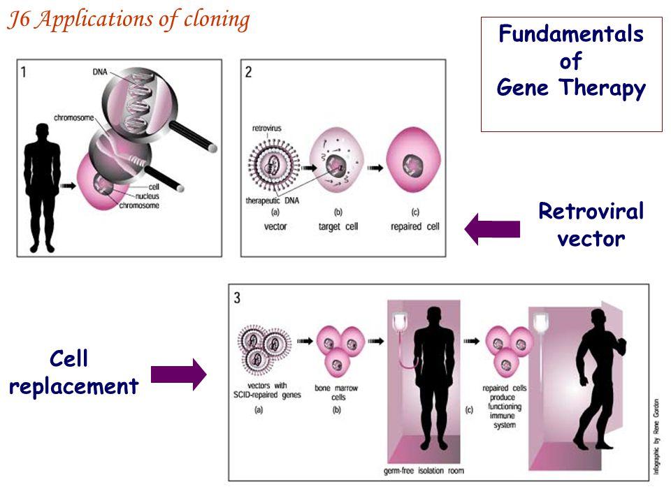 J6 Applications of cloning